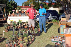 Cactuses for sale